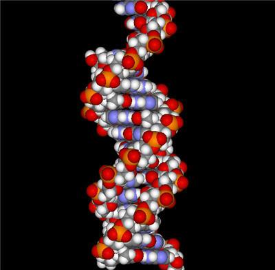 Informacion sobre el ADN